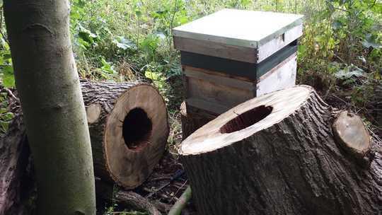 Upang Makatipid ng Mga Balahibo sa Honey na Kailangan Niyang Magdisenyo sa mga Bagong Mga Hives