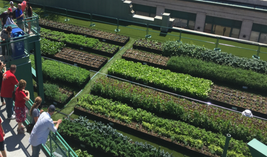 Os telhados verdes melhoram o ambiente urbano - por que todos os edifícios não os têm?