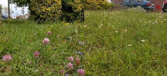 4 Steps to Make Your Lawn A Wildlife Haven