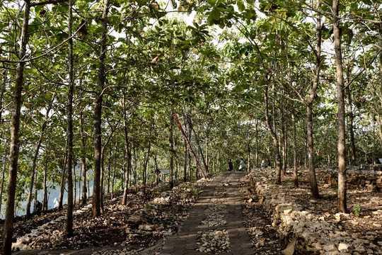 Cara Mendesain Hutan Yang Cocok Untuk Menyembuhkan Planet Ini