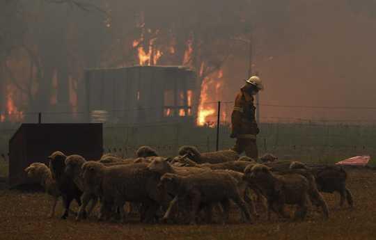 Wie Wildfire Smoke AfHow Wildfire Smoke wirkt sich auf Haustiere und andere Tiere