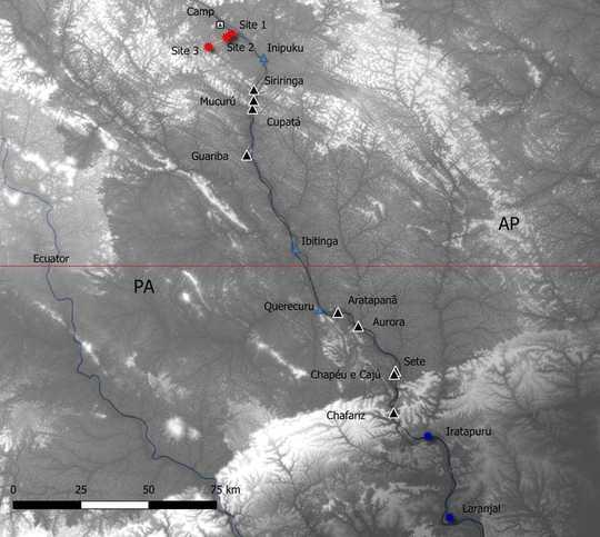 Amazonas høyeste tre ble akkurat 50% høyere - og forskere vet ikke hvordan