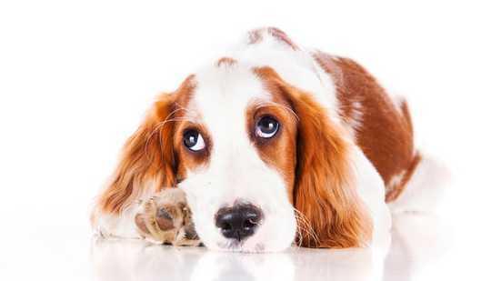 Anjing Really Boleh Mengejar kesepian