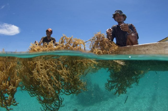 Seaweed Farming Could Really Help Fight Climate Change