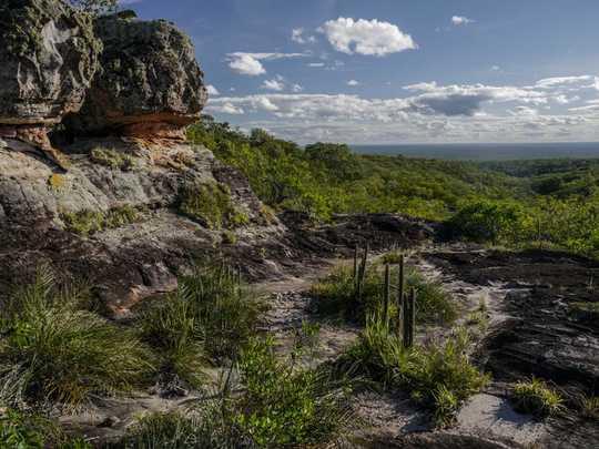 No es solo la selva amazónica de Brasil lo que está en llamas: los incendios bolivianos amenazan a las personas y la vida silvestre