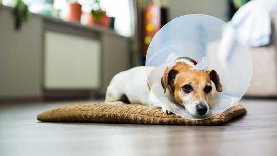 Ihre Persönlichkeit bestimmt, wie Sie Schmerzen verspüren - und genau so verhält es sich mit Ihrem Haustier