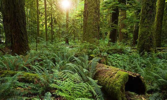 보호 된 Cathedral Grove, 브리티시 콜롬비아, 캐나다