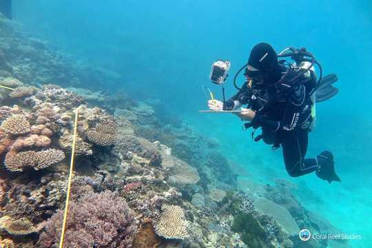 Two Reef Scientists Share Their Climate Grief