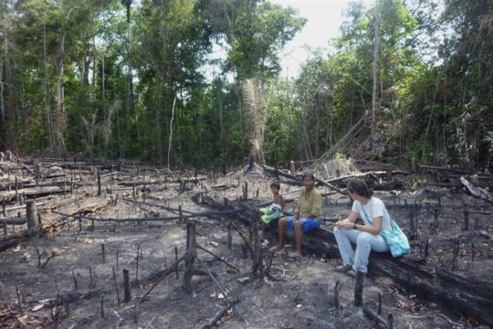 Bagaimana Api Melemahkan Kemampuan Hutan Hujan Amazon untuk Bangkit Kembali