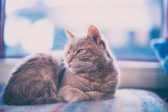 As u katte binnenshuis hou, moet u sorg dat u troeteldier gelukkig is