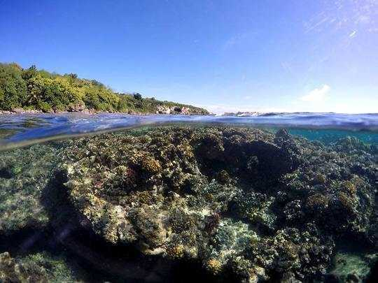 We Opened Up All Our Data On Coral Reefs – More Scientists Should Do The Same