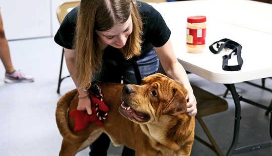 كيفية تجنب الأخطاء عند اعتماد الكلب