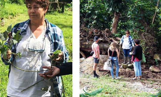 Meet the Farmers Reclaiming Puerto Rico's Agricultural History