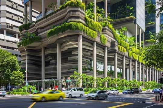 U kunt uw tuin ombouwen tot een miniatuurregenwoud