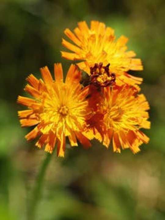 4 आपके लॉन को वन्यजीव बनाने के लिए कदम