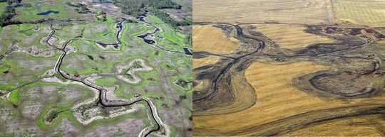 Ang Mas Mainit, Wetter Klima Nakikinabang Ang Ilang Mga Ibon Bilang Mga Wetlands Nawala