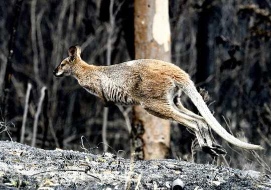 动物对野火的反应令人震惊。 这些是他们用来生存的技巧