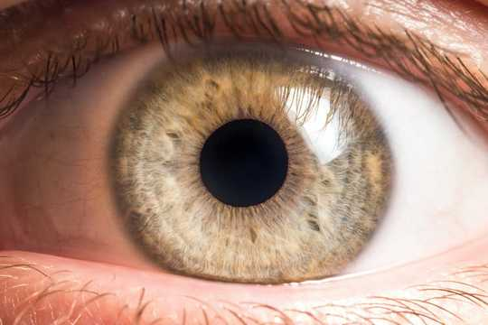 Bacteria Live On Our Eyeballs And Understanding Their Role Could Help Treat Common Eye Diseases