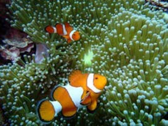 Hai nhà khoa học rạn san hô chia sẻ nỗi đau khí hậu của họ