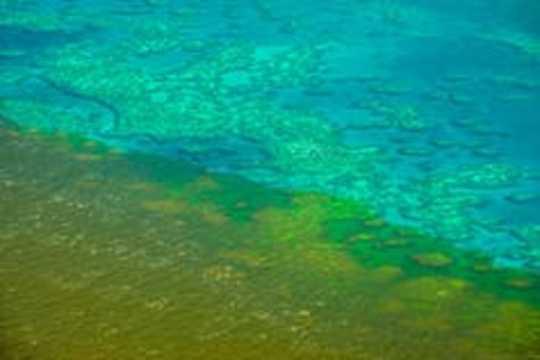 Twee rifwetenschappers delen hun verdriet over het klimaat