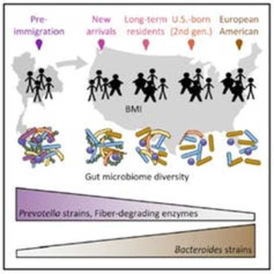 Başka Bir Ülkeye Gitmek Gut Bakterilerinizle Karışabilir