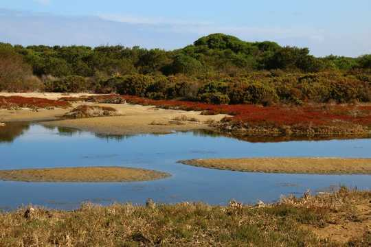 해수면 상승으로 습지가 더 많은 탄소를 저장
