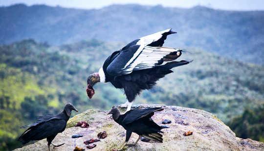 Ang pagiging isang Omnivore Ay Tunay na Kakaiba