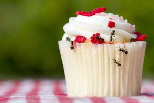 あなたがアリについて知る必要がある6素晴らしい事実