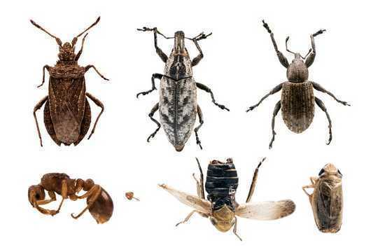 چگونه حفظ گونه های چتر طبیعت می تواند از مزایای کل آنها بهره ببرد
