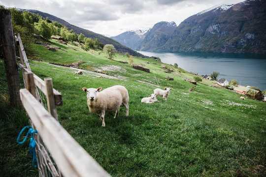 未來農場的3種養料方法也可以治愈地球
