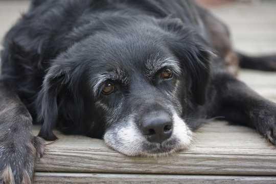 Ovatko koiran vuodet oikeita? Selitys koiran iän laskemisesta