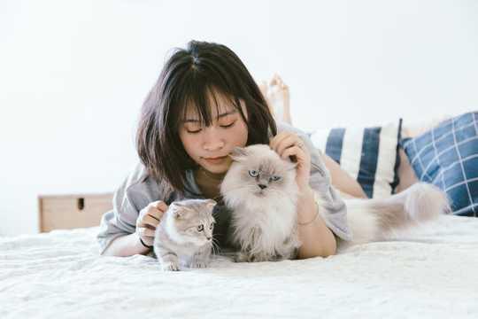 科学によると、猫をなでる方法