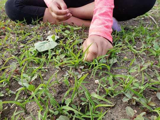 Tumbuh A Garden Boleh Membangkitkan Masyarakat Eco-Resilien, Silang Budaya, Makanan-Berdaulat