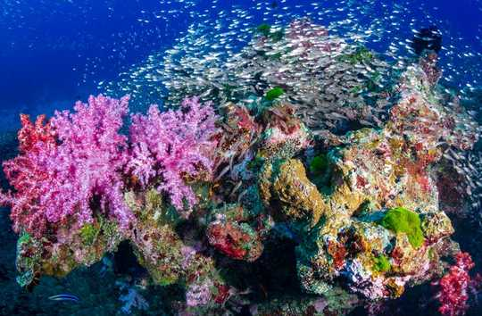 האם פסקול מתחת למים באמת יכול להחזיר את שוניות האלמוגים לחיים?