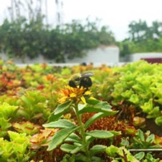 Paano Maprotektahan ng Green Roofs ang Mga Kalye sa Lungsod Mula sa Pagbaha