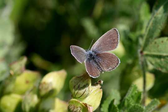Some Butterflies And Moths Can Not Adapt To The Changing Climate