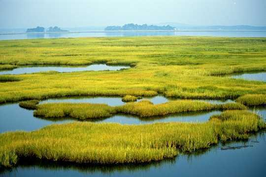 As Communities Rebuild After Hurricanes, Wetlands Can Significantly Reduce Property Damage