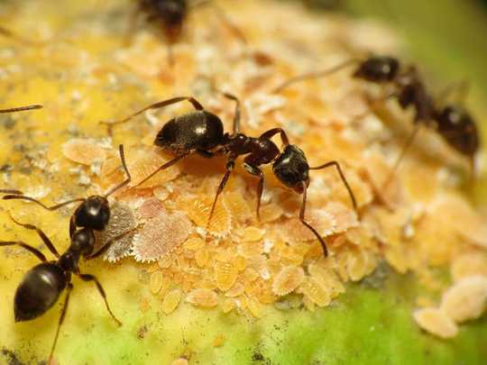 6 Amazing Facts You Need To Know About Ants
