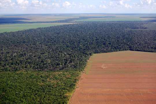 8 måter du kan hjelpe med å stoppe regnskogbrenningen