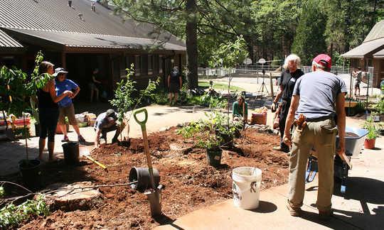 永續農業如何幫助野火倖存者恢復