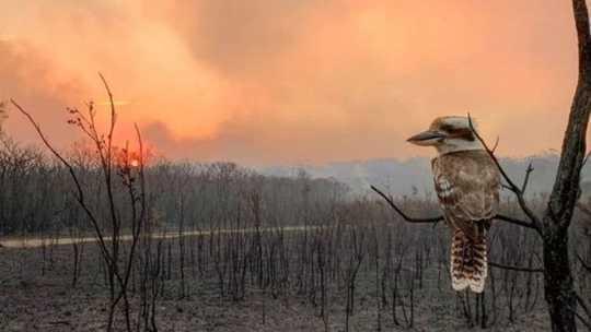 Cacciatore, cacciato: quando il mondo prende fuoco, come reagiscono i predatori?
