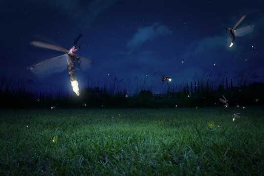 Kung Paano Magkalat ang mga Fireflies - At Anong Mga Senyor Ipinapadala Nila