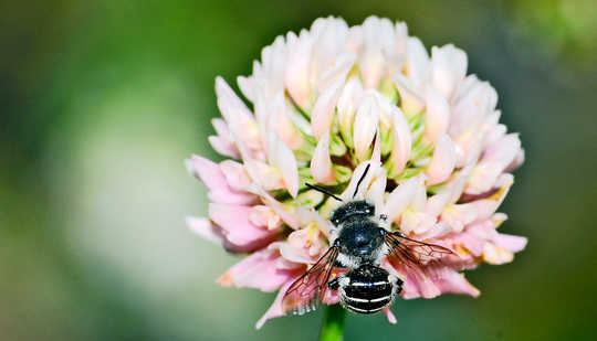5 Ways A Lazy Lawn Membuat Pollinators Senang