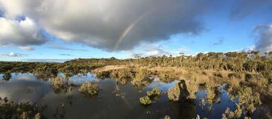 Rising Seas tillater kystnære våtmarker å lagre mer karbon