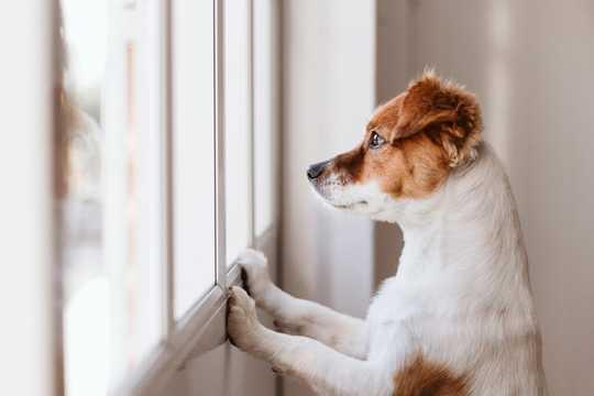 越來越多的狗盜竊案:您的寵物有多危險,該怎麼辦