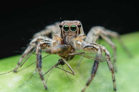 Spinnekoppe word bedreig deur klimaatsverandering - en selfs die grootste arachnophobes moet bekommerd wees