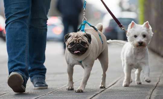狗如何幫助保持多種族社區的社會隔離