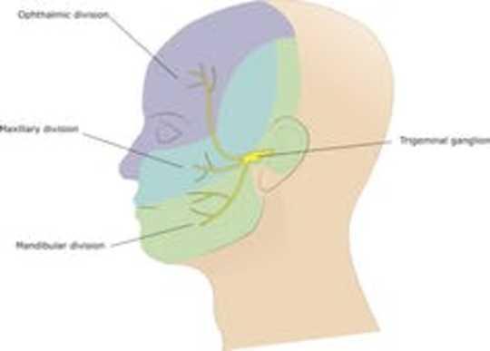 Bagaimana Sepotong Roti Menyebabkan Migrain?