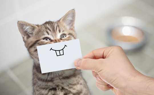 Ваша кошка болит? Как его выражение лица может содержать ключ