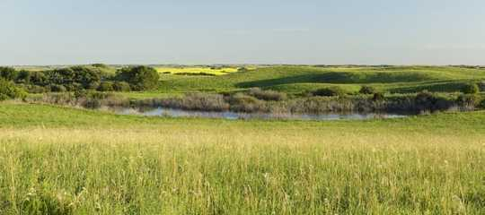 隨著濕地的消失,溫暖,潮濕的氣候使一些鳥類受益